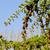 folhas · árvores · vida · inverno - foto stock © ironstealth