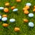 оранжевый · синий · таблетки · зеленая · трава · трава · здоровья - Сток-фото © ironstealth