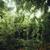 trópusi · erdő · dzsungel · Bali · Indonézia · természet - stock fotó © iunewind