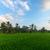 rizsföld · rizs · mezők · völgy · Bali · sziget - stock fotó © iunewind