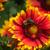 honingbij · zonnebloem · bee · bloem · natuurlijke - stockfoto © ivicans