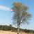 alleen · berk · boom · meer · landschap - stockfoto © ivonnewierink
