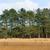 çam · ağaçlar · bahar · orman · grup · yeşil - stok fotoğraf © ivonnewierink