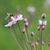 honingbij · water · natuur · groene · honing - stockfoto © ivonnewierink