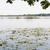 dutch ankeveense plassen stock photo © ivonnewierink