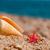 plage · belle · poissons · océan - photo stock © ivonnewierink