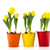 yellow tulips in colorful pots stock photo © ivonnewierink