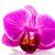 mor · orkide · beyaz · bahar · doğa · arka · plan - stok fotoğraf © ivonnewierink