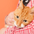 red cat on orange background stock photo © ivonnewierink
