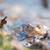 pormenor · dois · água · natureza · retrato · lago - foto stock © ivonnewierink