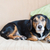 lui · hond · Engels · bulldog · permanente - stockfoto © ivonnewierink