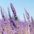 francês · panorâmico · ver · flor · paisagem - foto stock © ivonnewierink