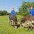 farm boys with their donkeys stock photo © ivonnewierink