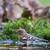 питьевая · вода · лес · воды · птица · ванны - Сток-фото © ivonnewierink