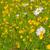Ромашки · свежие · Полевые · цветы · весны · лет - Сток-фото © ivonnewierink