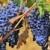azul · uvas · videira · enforcamento · vinha · folhas · verdes - foto stock © ivonnewierink
