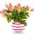 ваза · розовый · роз · изолированный · белый · любви - Сток-фото © ivonnewierink