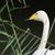 fehér · hattyú · úszik · víz · háttér · madár - stock fotó © ivonnewierink