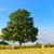 hooi · rollen · Frankrijk · heuvel · natuur · schoonheid - stockfoto © ivonnewierink
