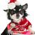 cão · carrinho · de · compras · vermelho · preto · branco · animal - foto stock © ivonnewierink