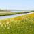 羊 · 風車 · オランダ語 · 島 · 野の花 · 花 - ストックフォト © ivonnewierink
