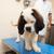 ветеринар · большой · собака · врач · женщины · животного - Сток-фото © ivonnewierink