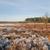 heather landscape in winter stock photo © ivonnewierink