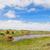 vee · ras · lang · koe · veld - stockfoto © ivonnewierink