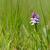болото · голландский · природы · трек - Сток-фото © ivonnewierink