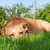 velho · cansado · cão · pastor · cabelo · triste - foto stock © ivonnewierink