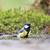 teta · água · pássaro · reflexão · animais · selvagens - foto stock © ivonnewierink