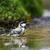 teta · água · animal - foto stock © ivonnewierink