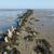 mudflat in dutch sea stock photo © ivonnewierink