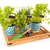 kitchen herbs on tray stock photo © ivonnewierink