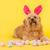 lapin · chien · lapin · de · Pâques · Pâques · portrait · drôle - photo stock © ivonnewierink
