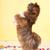 cane · dancing · cinese · cucciolo · bianco · felice - foto d'archivio © ivonnewierink