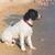 kutya · úszik · citromsárga · labor · tó · tart - stock fotó © ivonnewierink