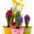 azul · primavera · flores · cabeça · planta - foto stock © ivonnewierink