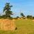 hay roll in france stock photo © ivonnewierink