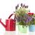 rosa · regador · lavanda · branco · flores · fundo - foto stock © ivonnewierink