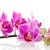 rózsaszín · orchidea · izolált · fehér - stock fotó © ivonnewierink