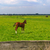 paarden · houten · hek · groene · weide · gebruikt - stockfoto © ivonnewierink