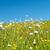 mező · virágok · hegyek · háttér · erdő · természet - stock fotó © ivonnewierink