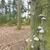 菌 · ツリー · 自然 · 風景 - ストックフォト © ivonnewierink