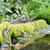 willow tit drinking stock photo © ivonnewierink