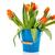 blue bucket with orange tulips stock photo © ivonnewierink