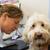 branco · padrão · poodle · cão · cachorro · animal · de · estimação - foto stock © ivonnewierink