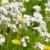 karahindiba · guguk · çiçekler · sarı · çim - stok fotoğraf © ivonnewierink