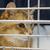 macska · fej · közelkép · természet · haj · állat - stock fotó © ivonnewierink