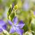flor · florescimento · plantas · família · nativo · europa - foto stock © ivonnewierink